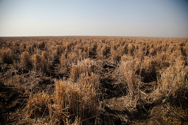 16/12/2015-Chbaish,Iraq.A view of the dry central marsh. The dry ground used to be a vital marsh, stretching out for hundreds of square kilometers.