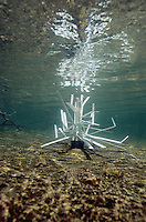 Fishiding Structure (cradle model) after being placed in shallow water.<br />