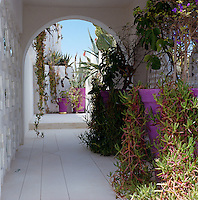 This covered walkway leading to the roof terrace is framed by abundant succulent plants in bright pink pots