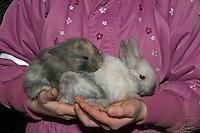 Zwergkaninchen, Zwerg-Kaninchen, einige Wochen alte Junge auf dem Arm eines Kindes, dwarf rabbit