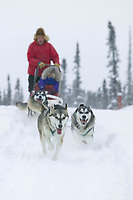 Dog mushing in the Brooks Mounatins near Wiseman, Alaska
