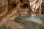 The Narrows in Lower Parunuweap Canyon. <br />