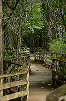 One of the lichen covered boardwalks through the Corkscrew Swamp Sanctuary
