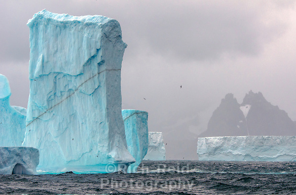 Antarctica, South Georgia and Falkland Islands February 2015