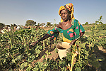 A woman works in her garden at the edge of the Habile Camp for internally displaced persons outside the village of Koukou Angarana, Chad. Some 28,000 people live in precarious conditions in this camp. More than 180,000 residents of eastern Chad have been displaced by violence spilling over from neighboring Darfur, inter-ethnic conflict, and fighting between rebels and the Chadian government.