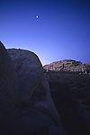 Joshua Tree Scenic With Moon