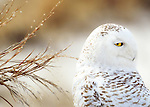Owls*
