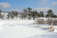 Ice Covered Trees and Bushes in a Hilltop Pasture on  a Cold Winter Day in New Hampshire