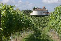 Vignoble des Landes / Landes Vineyard