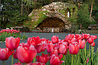 April 11, 2012; Tulips along the walkway to the Grotto. Photo by Barbara Johnston/University of Notre Dame