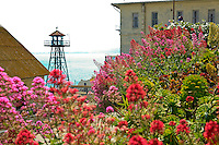 Guard tower overlooking historic buildings, Gardens of Alcatraz, Centranthus ruber, Jupiter's Beard