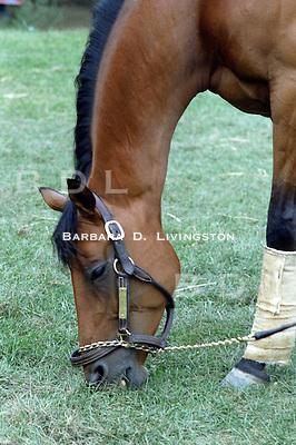 Rivalero, by Riva Ridge - multiple stakes winner for Calumet Farm
