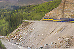 Alaska Railroad (with Holland America cars attached) climbing up to Denali National Park, following the Nenana River bed.
