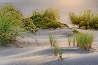 Soft evening light on Jockey's Ridge sand dune in Nags Head, on the Outer Banks.