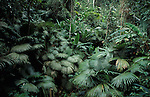 Khao Phra Taew Reserve, Phuket, Thailand, Jungle, Rainforest, Leaves, Green.Thailand....