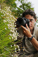 A photographer taking pictures of Santolina leuchanta, endemic in the Apuane Alps, Tuscany, Italy