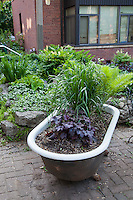 A cast-iron bathtub turned into a planter for ornamental grasses and perennial heuchera.