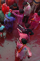 A lady is greeted by coloured water and gulal (coloured powder)by the locals at the temple of  Krishna at Nandgaon 5 kms away from Barsana on the 2nd day of lathmar holi, Uttar Pradesh, India . Lathmar holy is celibrated 7 days before the actual holi day.