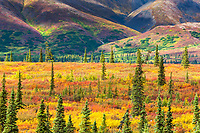 Autumn colors on the tundra, Alaska range mountains, interior, Alaska.