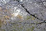 Springtime in Boston Common, Boston, MA, USA