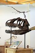 Dinosaurs: Fossils Exposed Exhibit at the Amazeum