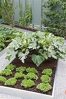 Fruit trees trellis espaliered in vegetable garden landscape, with raised beds of zucchi, lettuces, white stone paths