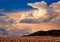 Desert Nevada Scenics