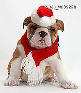 Christmas - animals  photos