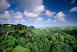 Rainforest canopy, Panama