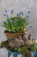 Easter still-life of a basket planted with grape hyacinths surrounded by colourful eggs and toy bunny rabbits on a small table