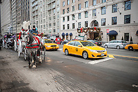 Central Park's horse drawn carriages