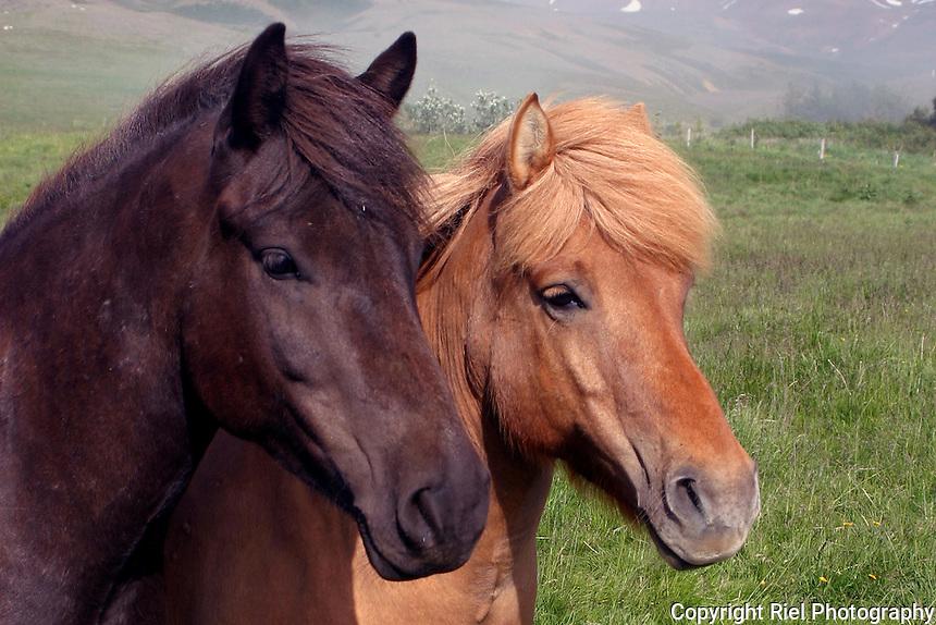 Quarter Horse Screensaver Software  WinSite