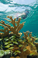 Julia Mozeika snorkeling the reef at .Hawksnest Bay in the Virgin Islands National Park.St. John, U.S. Virgin Islands