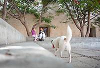 Enjoying a snack under the shade of a flamboyant tree. Plaza Santo Domingo, Oaxaca City, Oaxaca, Mexico