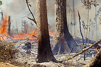 Flames and heat, detail of Amazon rainforest burning, environmental degradation caused by deforestation.