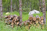 Brooks campground, Katmai National park, Alaska.