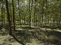 FOREST_LOCATION_90014
