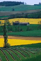 Vignoble du Lot-et-Garonne / Lot-et-Garonne vineyard