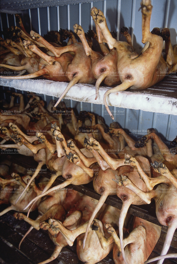 Korea. South Korea. Kimje area. Dog slaughter house. Dead dogs. Dog ...