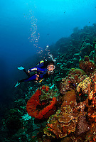 8 August 2009: SCUBA Diver Sally Herschorn explores the coral formations at Captain Don's Reef in Hato, Bonaire. Mandatory Photo Credit: Ed Wolfstein Photo