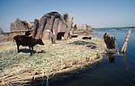 Marsh Arabs. Southern Iraq. Circa 1985. Islands known as dibin. Reed island houses. Cattle, Haur al Mamar or Haur al-Hamar marsh collectively known now as Hammar marshes Irag 1984