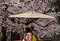Cherry blossoms in Japan 2015