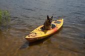 German Shepherd dog riding in a kayak on an inland lake in Michigan's Upper Peninsula.