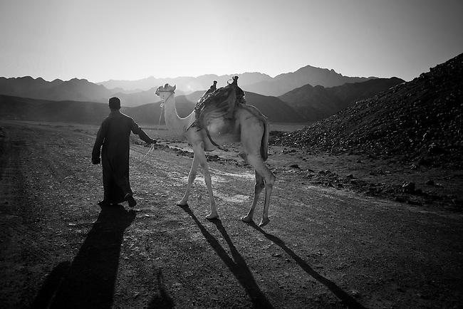A Bedouin man walks a camel on a dirt road near Dahab, Egypt. Sept. 23, 2009.