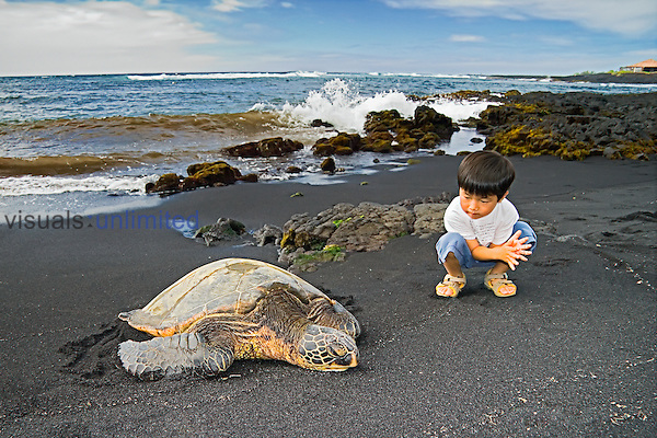An oriental child observing Green Sea Turtle, Chelonia mydas, Punalu`u Black Sand Beach, Big Island, Hawaii, Pacific Ocean.
