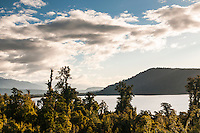 Lake Ianthe with kahikatea trees near Harihari at sunset, West Coast, South Westland, New Zealand
