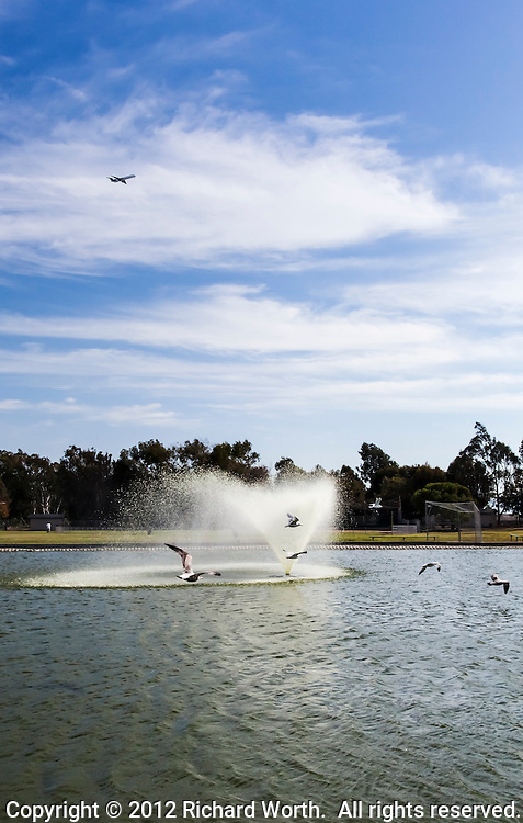 Gulls fly by the water fountain at San Lorenzo Park while a plane passes overhead.