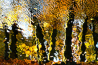 Colorful and abstract autumn reflection of beech trees in a lake located in Krefled, Germany.