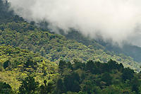 Cloud forest, Cost Rica, Central America