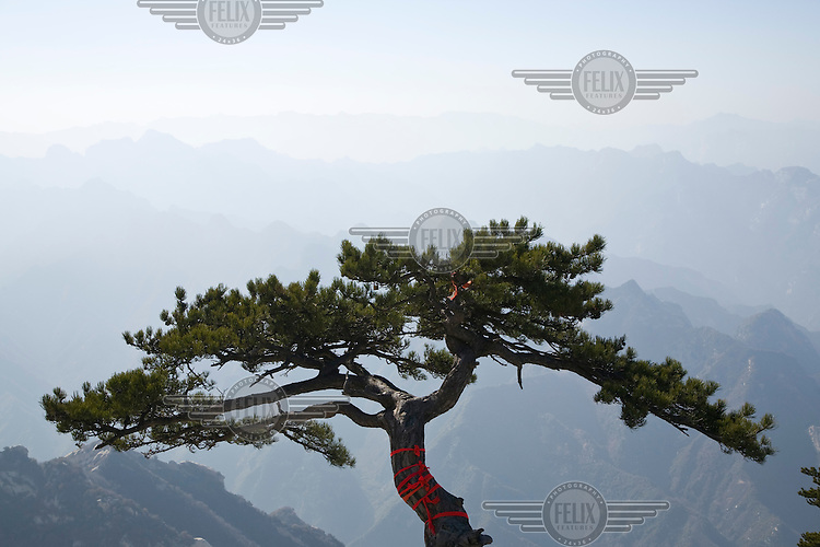 A tree wrapped with red prayer ribbons on Hua Shan Mountain, a series of granite domes near Xian, that forms one of Taoism's five sacred mountains. Previously a place of retreat and solitude for enlightenment seeking hermits, the spectacular scenery is now often crowded with tourists.